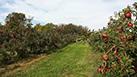 Agricoltura come base della crescita economica del nostro territorio.