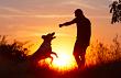 Dall'amore per i cani può nascere un lavoro? Scopriamo insieme la professione di educatore cinofilo.