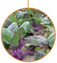 Agricultor Ecològic