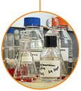 CFGM en Planta química