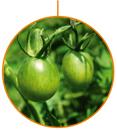 El criador de plantas y seleccionador de nuevas especies vegetales