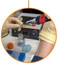 Grau en Química