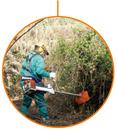 CFGM en Aprovechamiento y Conservación del Medio Natural