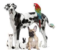 Grado En Veterinaria El Médico De Los Animales Qestudio Com